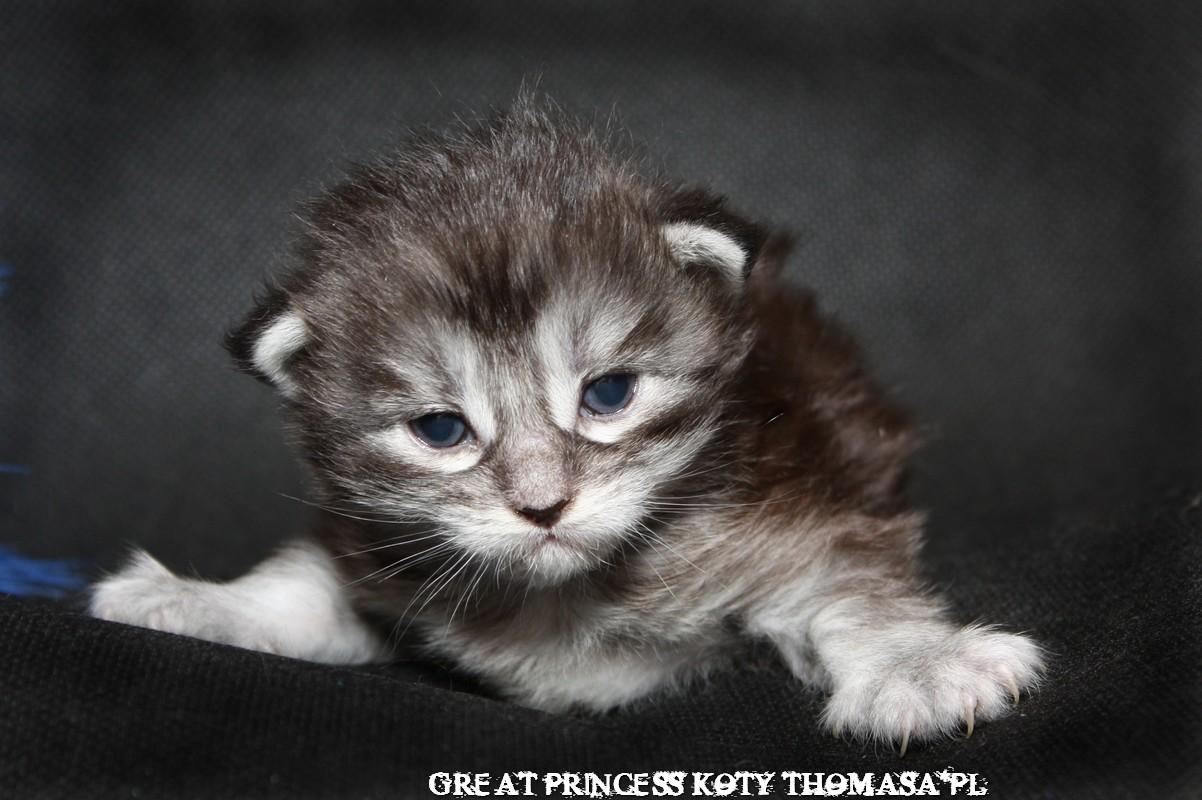 princess14dn.jpg